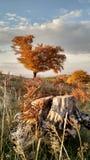 Журнал autum дерева заволакивает заход солнца стоковое изображение