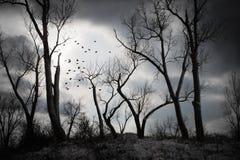 жуткая ноча Стоковые Фото
