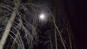 Жуткая луна Стоковая Фотография RF