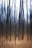 Жуткие деревья стоковое изображение rf