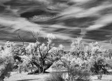 Жуткое небо пустыни Стоковое Фото