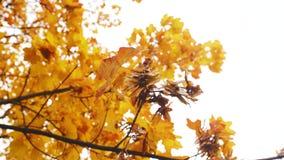 Жёлтый листья на ветке, качнувшись под осенним небом под ветром акции видеоматериалы