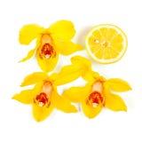 Жёлтый Стоковое фото RF