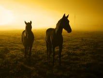 2 ждать лошади в sunrise_toned Стоковые Изображения RF