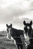Ждать лошади Стоковые Фото
