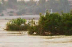 Ждать птицы Стоковое Изображение