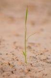 Ждать рис дождя Стоковое Изображение RF