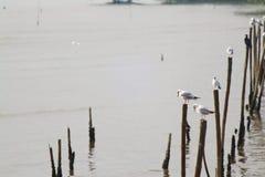 Ждите еду от группы в составе фокус белого переднего плана чайки мягкий стоя на длинной ручке Стоковое Изображение RF
