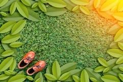 Забавляйтесь кожаный ботинок на рамке поля и лист травы jpg Стоковое фото RF