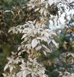 Заболевание на листьях дерева стоковые изображения