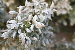 Заболевание на листьях дерева стоковое изображение