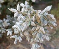Заболевание на листьях дерева стоковая фотография rf