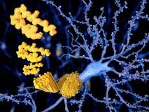 Заболевание Alzheimer, peptid бета-амилоида иллюстрация штока