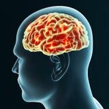 Заболевания мозга вырожденческие, Parkinson, синапсы, нейроны, ` s Alzheimer иллюстрация штока