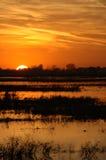 заболоченное место захода солнца Стоковая Фотография RF