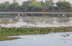 Заболоченное место и птицы Индия стоковые изображения