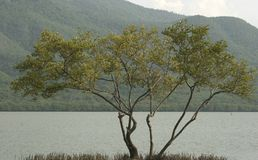 Заболоченное место лагуны Unare прибрежное в Венесуэле Стоковое Фото
