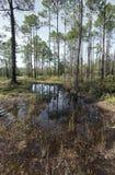 Заболоченное место прерии Флориды на парке штата заповедника заболоченного рукава реки Tarkiln Стоковая Фотография