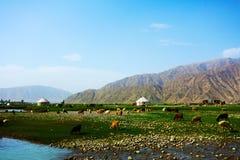 Заболоченное место с козами и коровами Стоковая Фотография RF