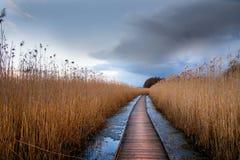 заболоченное место тропы деревянное Стоковое Изображение RF