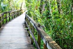 Заболоченное место Флориды, деревянный след пути на национальном парке болотистых низменностей в США Стоковые Фотографии RF