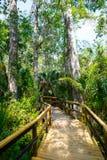 Заболоченное место Флориды, деревянный след пути на национальном парке болотистых низменностей в США Стоковые Изображения RF