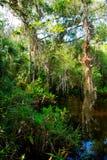 Заболоченное место Флориды, деревянный след пути на национальном парке болотистых низменностей в США Стоковая Фотография RF