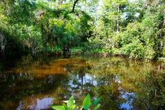 Заболоченное место Флориды, деревянный след пути на национальном парке болотистых низменностей в США Стоковая Фотография