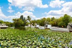 Заболоченное место Флориды, езда Airboat на национальном парке болотистых низменностей в США Стоковые Фото