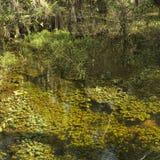 заболоченное место florida болотистых низменностей стоковое фото