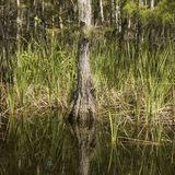 заболоченное место florida болотистых низменностей Стоковые Изображения