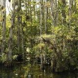 заболоченное место florida болотистых низменностей Стоковые Фотографии RF