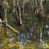 заболоченное место florida болотистых низменностей Стоковое Изображение