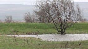 Заболоченные места в земледелии после проливного дождя весной Россия сток-видео