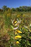 заболоченные места pecatonica illinois Стоковые Изображения RF