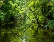 Заболоченный рукав реки зеленого цвета Луизианы стоковая фотография