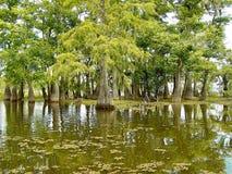 заболоченный рукав реки Луизиана стоковые изображения rf