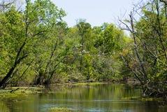 заболоченный рукав реки Луизиана Стоковая Фотография