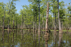 заболоченный рукав реки Луизиана Стоковые Изображения