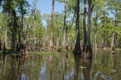 заболоченный рукав реки Луизиана Стоковая Фотография RF