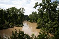 заболоченный рукав реки стоковые изображения rf