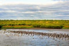 Заболоченный рукав реки Lafourche, Луизиана стоковые фотографии rf