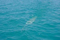 Забор планктона собирает стоковое изображение