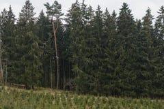 Забота леса - пересаживать деревьев стоковая фотография rf