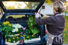 Забота женщин для цветков стоковое изображение