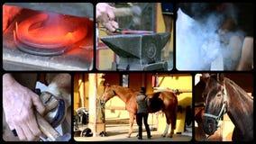 Забота лошади видеоматериал