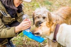 Заботить о любимчиках женщина подавая 2 собаки от пластичной выпивая чашки снаружи Стоковые Фото