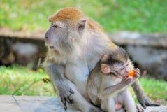 заботя детеныши обезьяны s стоковое фото rf