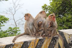 заботя обезьяны Стоковое Изображение RF
