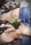 заботя окружающая среда детей Стоковые Фотографии RF